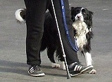 NZKC Rally-O is a dog sport that can be enjoyed by dogs and people of all ages and abilities